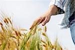 Hand einer Frau streicheln Weizenfeld
