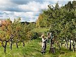 Couple d'âge mûr cueillette des pommes