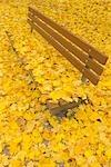 Banc de parc, d'érable feuilles en automne, Nuremberg, Bavière, Allemagne