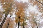 Beech Forest, Spessart, Bavaria, Germany