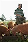 Boy (7-9) feeding pigs in sty