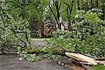Fallen Tree on Road, Toronto, Ontario, Canada
