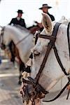 Horses and Riders, Feria de Malaga, Malaga, Andalucia, Spain