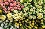 Gros plan des tulipes au marché