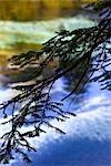 Close-Up of Tree Branch, Hamurana Springs, Rotorua, North Island, New Zealand