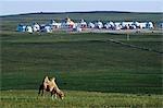 Xilamuren de Chine, Province de Mongolie intérieure des Prairies. Un chameau avec tentes yourte nomade au loin.