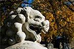 China, Peking, Zhen Jue Tempel. Eine dekorative Löwe Statue sitzt unter dem Herbstlaub.