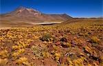 Lake Miscante,San Pedro de Atacama,Region II,Chile
