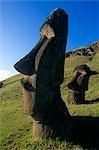 Chili, île de Pâques. Tête de moai sur une colline de Rano Raraku, un site où plusieurs moai ont été extraites dans la roche volcanique.