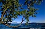 Chili, région X, Lake District. Osorno MT 2 652 m (pieds 8 701), volcan éteint vue tout au long du lac Llanquihue, dans la région des lacs chilienne