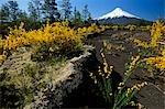 Chili, région x. Mt Osorno, 2, 652 m (pieds 8 701), volcan chilien Lake District, Los Lagos, Chili