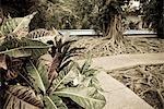 Cuba, la Havane. La Villa du XIXe siècle appartenant à et habite depuis 25 ans, jusqu'en 1960 par Ernst Hemmingway. La maison et ses biens ont été préservés comme il les a laissé, donnant un iinto un aperçu de son style de vie quotidienne.