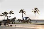 Cuba,Cienfuegos. Horse drawn taxis the Malecon,the road from central Cienfuegos to Punta Gorda