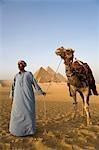 Un chamelier se tient devant les pyramides de Gizeh, Égypte.