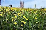 Buttercups in front of Widecombe-in-the-Moor Church,Dartmoor