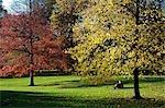 Golden leaves in St James Park in Autumn