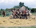 Ânes foulent aux pieds de maïs pour enlever les grains dans un cadre rural typique entre Ziway et SSD de Butajira. Selon la disponibilité des animaux, un agriculteur peut utiliser des poneys, des ânes ou des bœufs à cet effet.