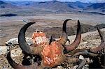 Monastère de Ganden. Gravé d'incantations et prières, les crânes des yaks se trouvent sur le circuit de pèlerinage ou kora, près de monastère de Ganden, avec vue sur la vallée de Phenyul au-delà.