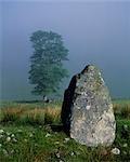 Permanent arbre de Pierre et chêne
