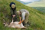 Domaine Benmore stalker, Neilson Bissett, grallochs un cerf sur la colline