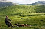 Glissement la colline à l'extrémité d'une tige avec succès par un cerf élaphe mâle sur le domaine Benmore