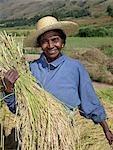 A Malagasy woman gathering rice from paddies near Ambalavao,Madagascar