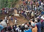 Eine große Schar von madagassischen Menschen sehen eine Zebu Savika oder Rodeo, Kings Palace, Ambositra. Sie finden statt drei Mal im Jahr, wenn junge Männer versuchen, auf der Rückseite eines Stiers fahren.