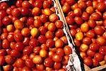 Boxes of Tomatoes,Oxkutzcab Market,Yucatan