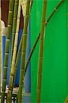 Maroc, Marrakech, Jardin Majorelle. Le jardin Majorelle est un jardin botanique à Marrakech, Maroc. Il a été conçu par l'artiste expatrié français Jacques Majorelle en 1924 et depuis 1980, le jardin a été dirigé par Yves Saint-Laurent et Pierre Bergé.