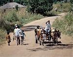 Ox-drawn carts are familiar sights in rural Malawi.