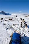 Norway,Troms,Lyngen Alps. Travel over the mountains of the Lyngen Alps via dog sled guided by veteran explorer Per Thore Hansen. .