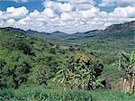 Fertile agricole des pays dans le district de Makueni, au sud-est de Nairobi.