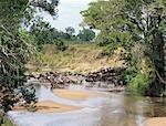 Gnous et zèbres de Burchell boire de la Sand River, près de la frontière du Parc National du Serengeti et réserve Masai Mara, Kenya