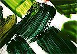 Green paint strokes