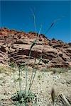 Rocky desert landscape, focus on plant