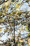 Branches d'arbres, plein cadre