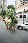 Chine, Province du Guangdong, Guangzhou, homme transportant des plantes d'intérieur sur le vélo