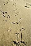 Animal pistes en sable, plein cadre