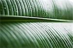 Dew drops on leaf, extreme close-up, full frame