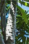 Branche d'arbre épineux, vue d'angle faible