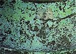 Colored algae on dark wall.