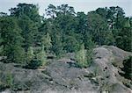 Suède, paysage rocheux et arbres