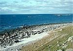 Plage de rochers de Suède