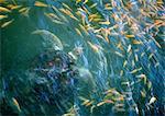 School of fish and sea turtle underwater