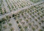 Tunisie, verger de Palm, vue aérienne