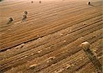 France, Lorraine, des balles de foin dans les champs