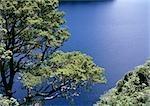 Nouvelle-Zélande, arbre donnant sur l'eau, vue grand angle