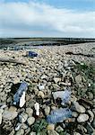 Déchets éparpillés sur la plage de rochers