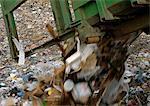Dump truck dumping trash into landfill
