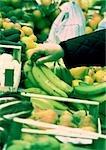 Main produisent des bananes en choisissant parmi, gros plan